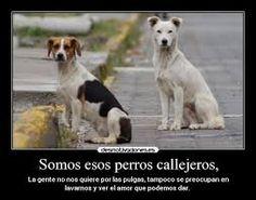 Resultado de imagen para perros callejeros lindos
