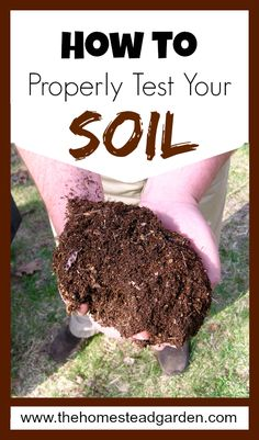 How to Properly Test Your Soil