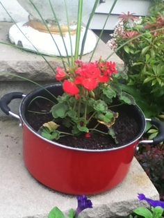 Old cooking pot converted into a flower pot. Just drill holes in the bottom, add soil and plant.