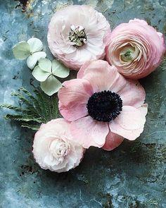 Flowers bouquet floral arrangements ranunculus ideas for 2019 My Flower, Fresh Flowers, Spring Flowers, Beautiful Flowers, Spring Colors, Cactus Flower, Exotic Flowers, Purple Flowers, Anemone Flower