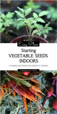 Easy Plan for Starting Vegetable Seeds Indoors | eBay