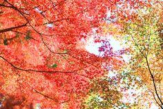 Fall colors. <3