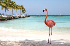 Auf Aruba findet ihr Flamingos am Strand, Divi-Divi-Bäume und einen Naturpool. Hier kommen meine 6 Lieblingsstrände, darunter der beste Strand der Welt.