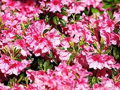 Best Trees & Shrubs To Plant In New England - CBS Boston