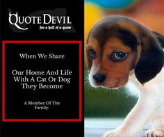 Pet Insurance Quotes, Cheap Pet Insurance, Insurance Broker, Dublin City, When Us, Competition, How To Become, Pets, Life