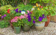 Growing Flowers, Planting Flowers, Flower Gardening, Gardening Tips, Urban Gardening, Flowers Garden, Container Plants, Container Gardening, Container Flowers