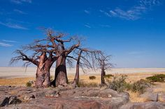 Kubu Island, Botswana / Остров Кубу, Ботсвана