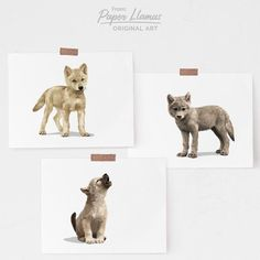 Baby wolf cub nursery art – set of 3 unframed prints – mountain animal adventure children's art – woodland baby room decor – Baby Nursery Boy – Baby Shop Woodland Nursery Boy, Woodland Baby, Forest Nursery, Woodland Forest, Kallax, Baby Room Decor, Room Baby, Baby Rooms, Scandinavian Nursery