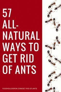 How to get rid of fire ants in organic garden