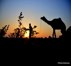 Jaisalmer Desert Safari >>>#camping #Jaisalmer #DesertSafari