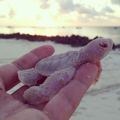 This baby albino sea turtle was found on Vamizi Island in Mozambique. | Look At These Rare Baby Albino Sea Turtles