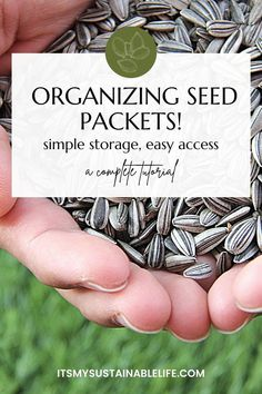 Organizing and storing leftover garden seeds, no matter if you save homegrown seed or leftover quality seeds, means ease of access for taking seed inventory as well as ensuring viable germination come planting time. | It's My Sustainable Life @itsmysustainablelife #organizingseeds #storingseeds #storingseedsfornextyear #storingseedslongterm #storingseedsideas ##organizinggardenseeds #itsmysustainablelife