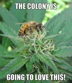 Bees Please...