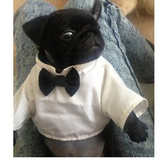 pug puppy trés chic! Would you like red or white wine with your meal?