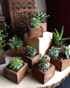 Types Of Succulents, Cacti And Succulents, Planting Succulents, Planting Flowers, Outdoor Plants, Air Plants, Garden Plants, House Plants, Indoor Garden