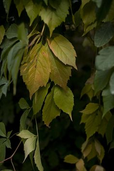 """The leaves of memory seemed to make    A mournful rustling in the dark""  Henry Wadsworth Longfellow"