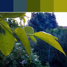 《Light Through Leaves Palette》