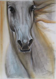 Horse portret, animal, noble, stallion, race, white, feelings.