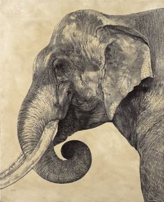 Indian Elephant II / Elephas maximus indicus / 2007 / 51 x 41 cm / Pencil on panel Realistic Elephant Tattoo, Elephant Tattoo Design, Asian Elephant, Elephant Art, Elephant Anatomy, Asiatic Lion, Elephant Sketch, Elephas Maximus, Tiger Drawing