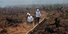 """#Jokowi Presiden Jokowi: Indonesia Perlu 3 Tahun Bereskan Masalah Kabut Asap. #Presiden Joko Widodo menyatakan, Indonesia memerlukan waktu untuk menyelesaikan masalah pembakaran lahan dan hutan yang mengakibatkan kabut asap. Tiga tahun adalah waktu yang diperlukan untuk melihat hasil dari upaya mengakhiri masalah yang muncul setiap musim kemarau itu. """"Kabut asap bukanlah perkara yang dapat diselesaikan dalam waktu singkat, kata Presiden yang dir"""