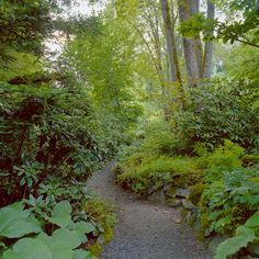 shade garden in the Pacific Northwest