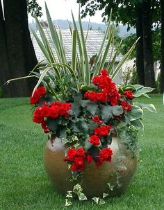 container planting ~ Great color
