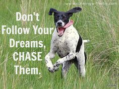 RUNNING WITH OLLIE: Don't Follow Your Dreams, Chase Them (an August Update) - click through to read.