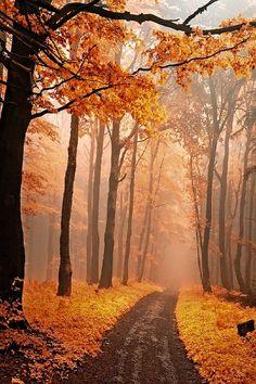 Secrecy of autumn roads by Janek Sedlar