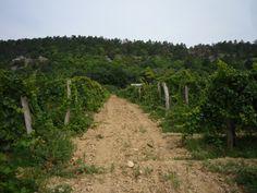 Tanulmányutak - Kert Lap Vineyard, Outdoor, Outdoors, Vine Yard, Vineyard Vines, Outdoor Games, The Great Outdoors