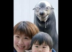 I have NO IDEA why this makes me laugh. Asians WATCH OUT. 125 Amazing Animal Photobombs (PHOTOS)