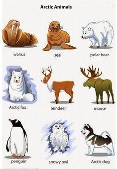 English Words, English Grammar, English Language, Grammar And Vocabulary, English Vocabulary, Picture Cards, Home Schooling, Esl, Teaching