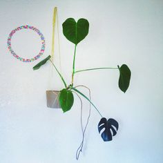 Hanging plants from the walls because we've run out of conventional space for them