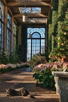 Longwood Gardens, Kennett Square, PA    www.animalearthessence.com