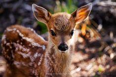 Awww...it's a baby deer by Rick Parchen / 500px