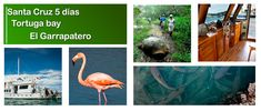 Galapagos Islands, Tours, Tour Guide, Make It Yourself, Travel, Animals, Santa Cruz, Guayaquil, Beaches