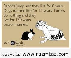 LESSON ABOUT ...RABBITS,DOGS,AND TURTLES..