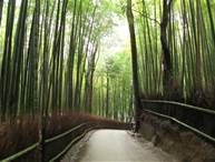 bamboo forests - Bing Images