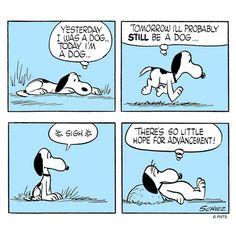Dog life.