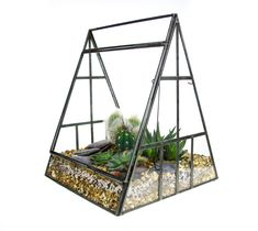 This stylish metal and glass pyramid terrarium gives a real indoor green house feel to any space. Elegant geometric lines provide a modern design that really complement the living succulent and cactus plants inside. Large Terrarium, Cactus Terrarium, Terrarium Kits, Terrariums, Cacti And Succulents, Planting Succulents, Cactus Plants, Decorative Pebbles, Terrarium