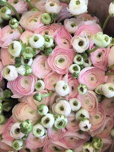 Bulb Flowers, Faux Flowers, Fresh Flowers, Pink Flowers, Amazing Flowers, Beautiful Flowers, Ranunculus, Peonies, My Flower