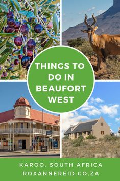 Don't blow past this Karoo town in a rush; stop over and discover 10 things to do in Beaufort West. Beaufort West, Stuff To Do, Things To Do, Wildlife Safari, Slow Travel, African Safari, Africa Travel, Stargazing, Where To Go