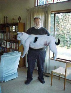 cat....cat???