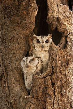 . http://media-cache8.pinterest.com/upload/268527196502057901_0UPfRWHu_f.jpg lynhardy birds