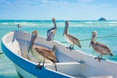 Waiting for Lunch - Pelicans sunning themselves in the Mexican sun near Playa Del Carmen.  These guys loved to pose for the photographers…