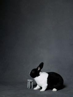 Portraits of the Bunny Hop Video Stars – Vogue