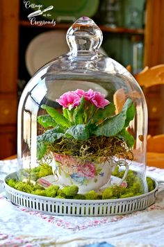 From the teacup gardens club board. Recipe suggestion: Fill a round tray with spring green moss and cover your pink primroses tucked neatly in a flowery teacup (or whichever bloom you choose) with a standout glass cloche. For a stunning table display Spring Flower Arrangements, Flower Centerpieces, Spring Flowers, Floral Arrangements, Centerpiece Ideas, Easter Flowers, Easter Centerpiece, Easter Decor, Teacup Flowers