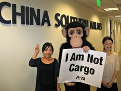 Victory!! China Southern Airlines will stop transporting live primates for laboratory experiments on all flights!