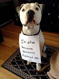 Please Foster so Your Local Rescues can Save Another Life