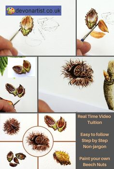 Learn to paint realistic botanical illustrations in watercolor. Easy to follow video tutorials that will guide you, without jargon, through the whole process. I talk as I paint so you don't miss anything and you see exactly what I am talking about at the same time. . #PaulHopkinson #TheDevonArtist #botancialpainting #botanicalwatercolor #botancialwatercolour #watercolourlessons #watercolorlessons #learntopaint #howtopaint #paintinglessons #artlessons