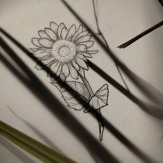 #DaniloSales #Seiva #Tattoo #Tatuagem #TattooArtist #Tatuador #Draw #Desenho #Illustration #Ilustração #Tatuagemfeminina #Tatuagemmasculina #blackwork #blackworker #botanictattoo #botanic #tatuagemdelicada #delicada #tatuagembotanica #engraving #blackink #blacktattoo #linework #blackworker #woodcuttattoo #dotwork #pontilhismo #black #preto #flower #flowertattoo #ilustraçãobotanica #pontilhismo #miniflowers #flor #tattoo #ideias #tattooideias #sunflower #girassol